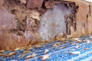 Termite Control Roanoke VA